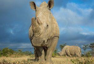 نیمی از همه گونههای جانوری تا پایان قرن منقرض میشوند!