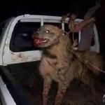 استفاده داعش از شیر و سگ