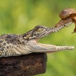 شجاع ترین حیوان جهان