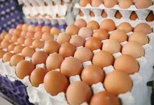 گرانی 800 تومانی تخممرغ در 3 روز