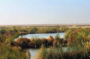 گشت و گذار در جنگلهاي سبز خوزستان؛غرش كرخه در بيشهزارها!