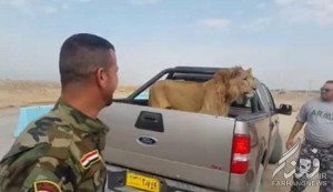 سگ داعش